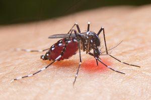 Largest Dengue Outbreak